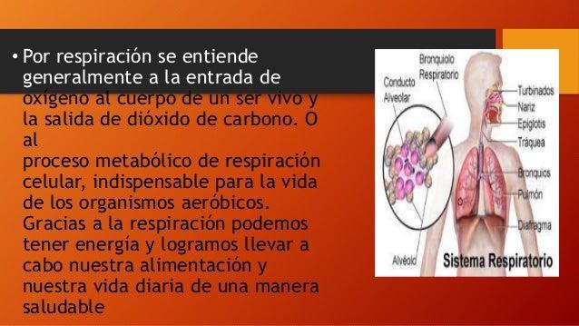 Mecanismo de respiraci n intercambio de gases for Que se entiende por arquitectura