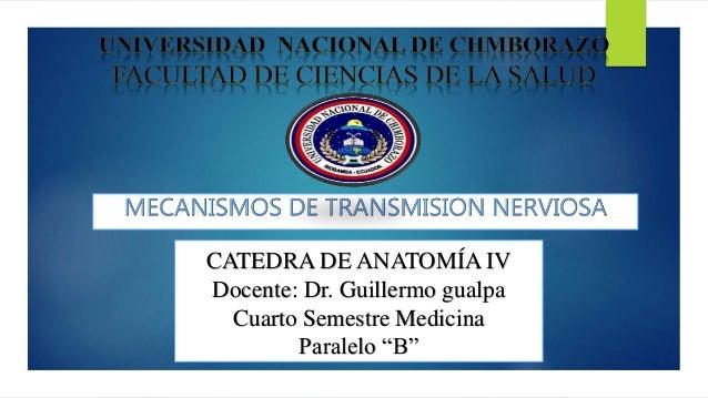 "CATEDRA DE ANATOMÍA IV Docente: Dr. Guillermo gualpa Cuarto Semestre Medicina Paralelo ""B"""