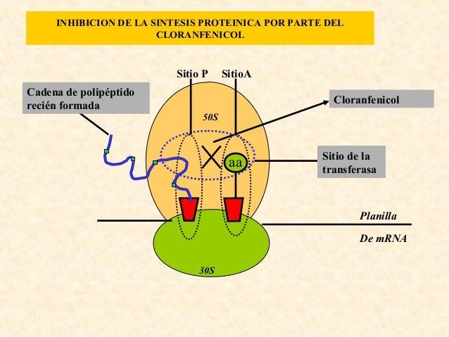 Mecanismos de acción de los quimioterapicos