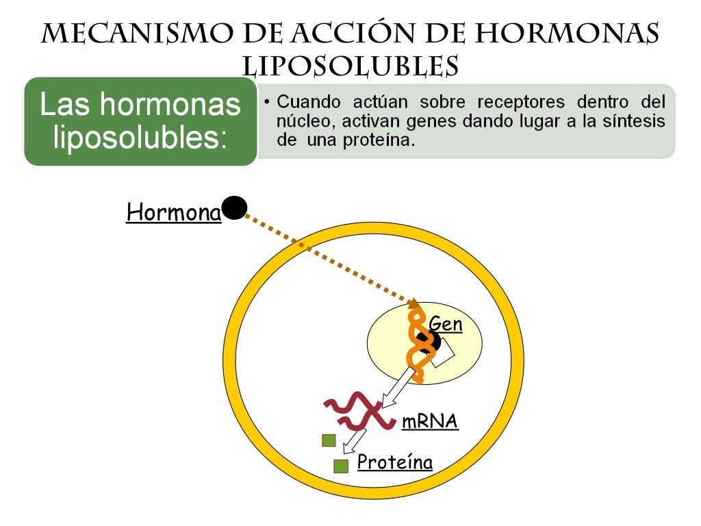 Mecanismos de accion hormonal