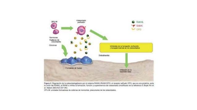 PROTEINAS ADAPTADORAS • TRAF son proteínas adaptadoras citoplásmicas que se unen a la dominios intracelulares de diversos ...