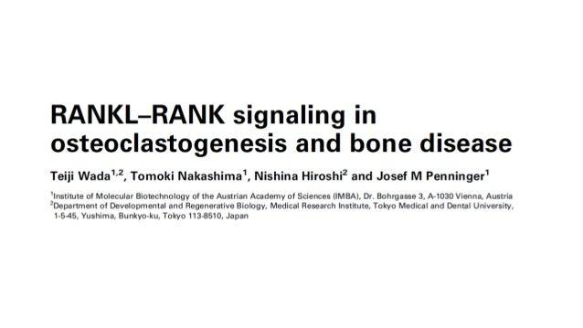 GENERALIDADES • Los huesos están en constante remodelado a través de la síntesis de la matriz ósea por los osteoblastos y ...