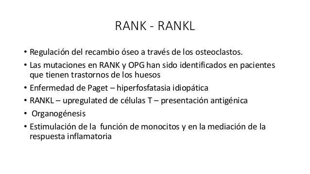 RANK - RANKL • RANKL y M-CSF inducen formación de osteoclastos a partir de monocitos derivados de bazo y medula ósea en au...