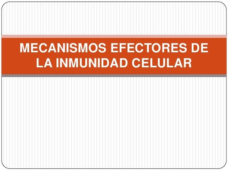 MECANISMOS EFECTORES DE  LA INMUNIDAD CELULAR
