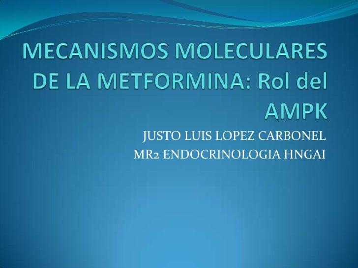 MECANISMOS MOLECULARES DE LA METFORMINA: Rol del AMPK<br />JUSTO LUIS LOPEZ CARBONEL<br />MR2 ENDOCRINOLOGIA HNGAI<br />