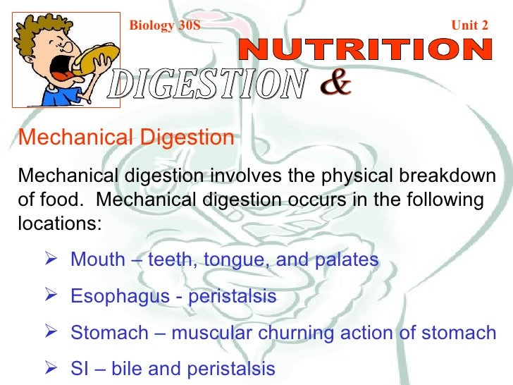 mechanical & chemical digestion, Cephalic Vein