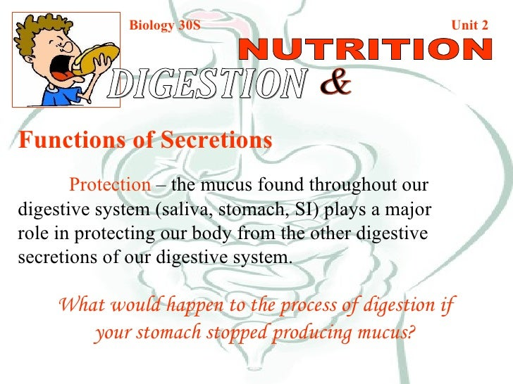 Biology 30S   Unit 2 DIGESTION  & NUTRITION Functions of Secretions Protection  – the mucus found throughout our  digestiv...