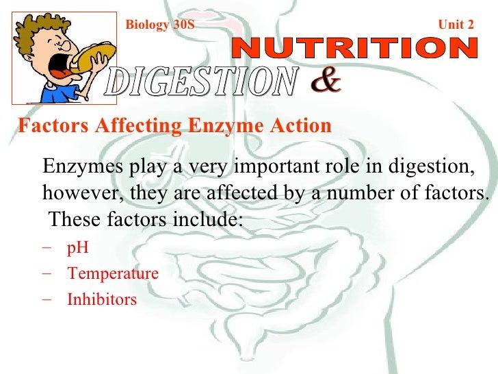 Biology 30S   Unit 2 DIGESTION  & NUTRITION <ul><li>Factors Affecting Enzyme Action </li></ul><ul><li>Enzymes play a very ...
