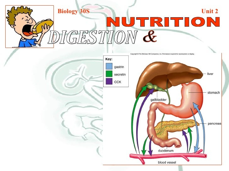Biology 30S   Unit 2 DIGESTION  & NUTRITION