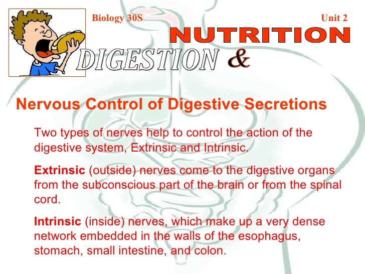 Biology 30S   Unit 2 DIGESTION  & NUTRITION Nervous Control of Digestive Secretions Two types of nerves help to control th...