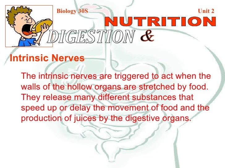 Biology 30S   Unit 2 DIGESTION  & NUTRITION Intrinsic Nerves The intrinsic nerves are triggered to act when the walls of t...