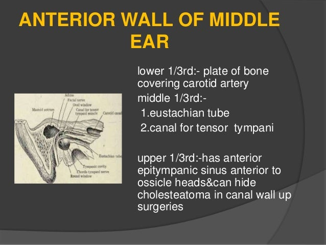 Anatomy And Physiology Of Middle Ear Spaces