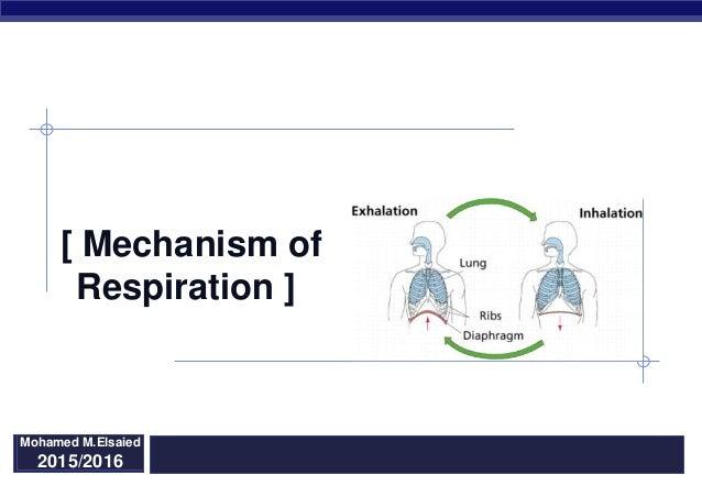 Regents Biology [ Mechanism of Respiration ] 2015/2016 Mohamed M.Elsaied 2015/2016
