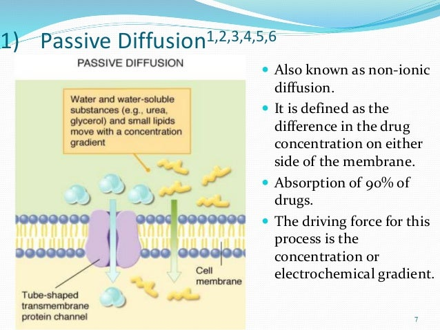 Mechanisms Of Absorption Of Drugs