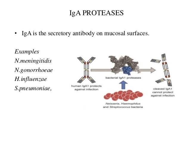 Mechanism Of Bacterial Pathogenesis And Virulence