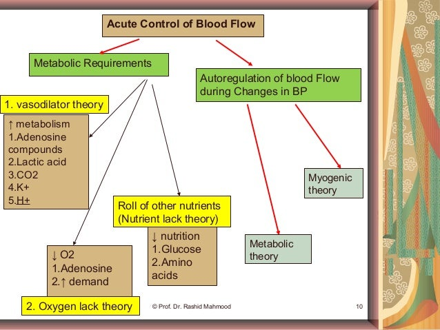 mechanisms of blood flow in the Mechanisms controlling cerebral blood flow (cbf) regulation were developed during the 19th and 20th centuries the earliest was the monro-kelly doc-trine,1 which postulated that there are 3 incompres-sible constituents inside the skull: cerebral tissue.