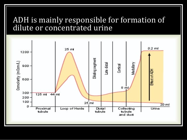 MECHANISM OF CONCENTRATION OF URINE