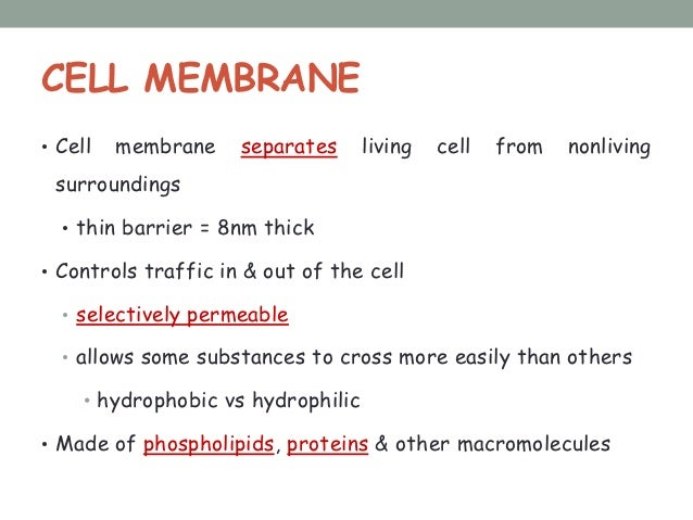 CELL MEMBRANE• Cell   membrane    separates      living   cell   from   nonliving surroundings  • thin barrier = 8nm thick...