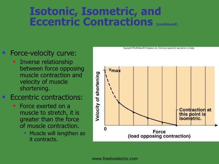 force velocity relationship muscle contraction mechanism
