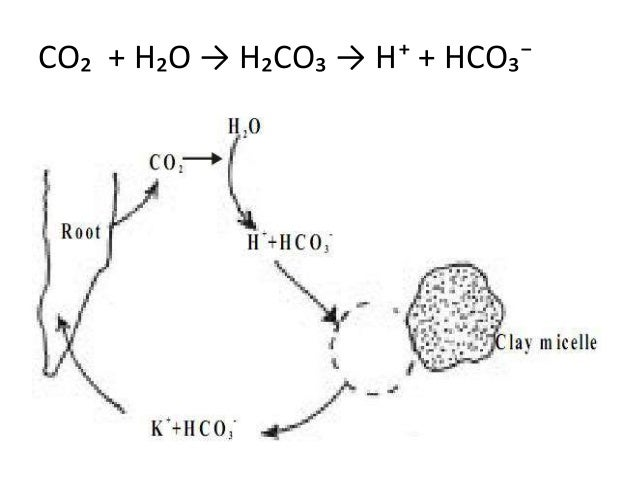 Mechanism of uptake and transport of nutrient ions in plants