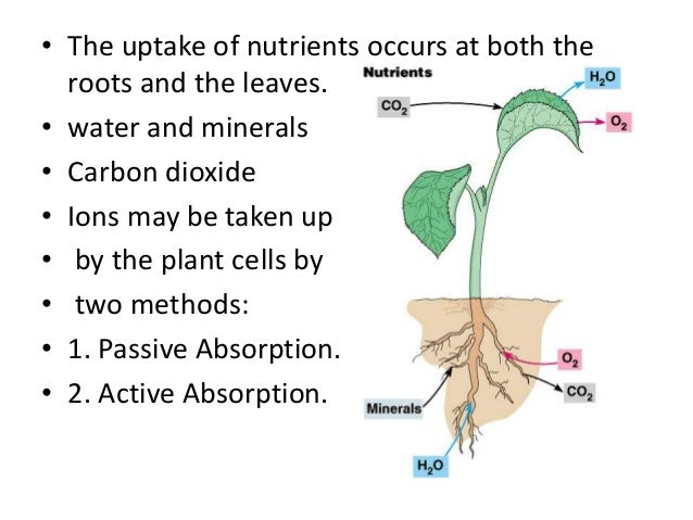 active and passive absorption of water