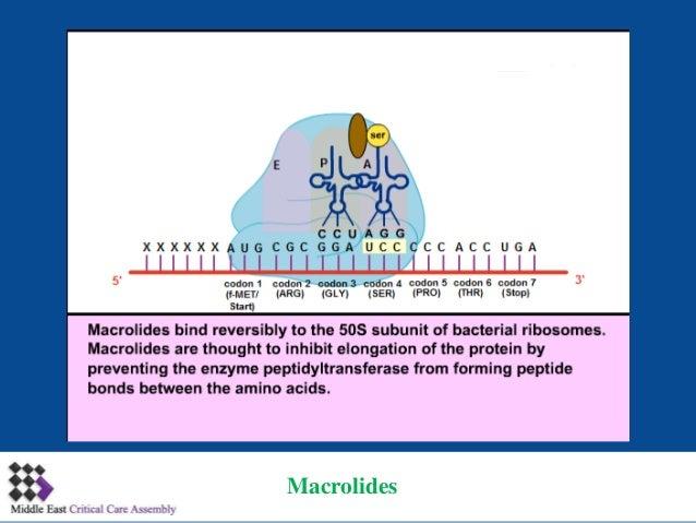 mechanism of action of antibiotics pdf