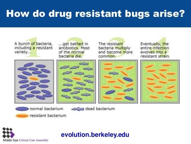 Antibiotic Resistance Evolution Natural Selection