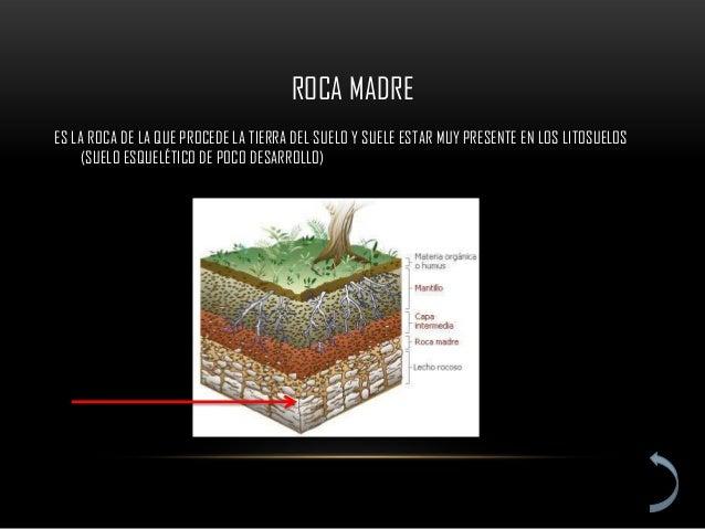 ROCA MADREES LA ROCA DE LA QUE PROCEDE LA TIERRA DEL SUELO Y SUELE ESTAR MUY PRESENTE EN LOS LITOSUELOS     (SUELO ESQUELÉ...