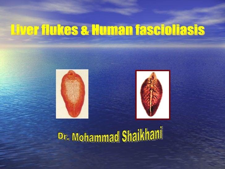 Liver flukes & Human fascioliasis Dr. Mohammad Shaikhani