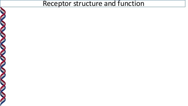 Receptor structure and function