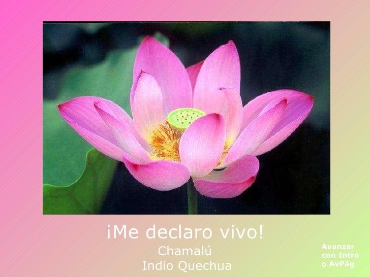 ¡Me declaro vivo! Avanzar con Intro o AvPág Chamalú  Indio Quechua