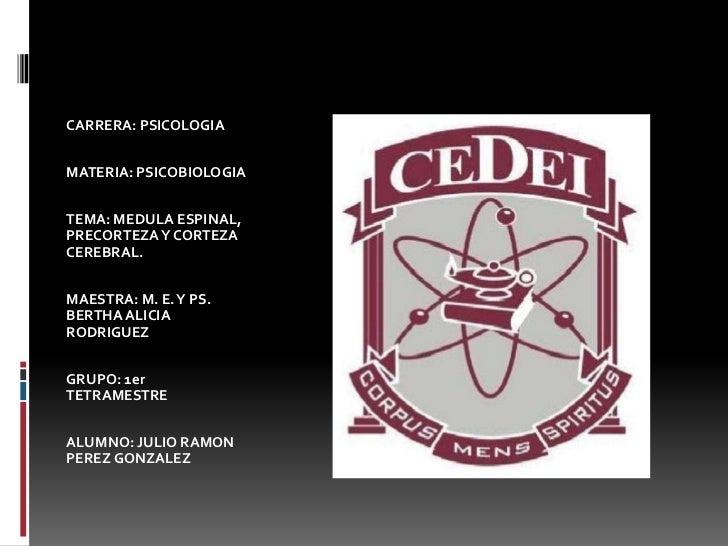 CARRERA: PSICOLOGIAMATERIA: PSICOBIOLOGIATEMA: MEDULA ESPINAL,PRECORTEZA Y CORTEZACEREBRAL.MAESTRA: M. E. Y PS.BERTHA ALIC...