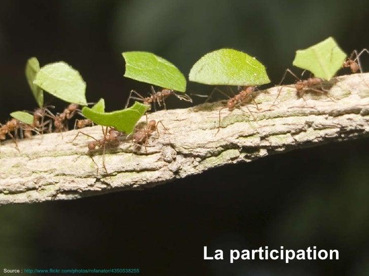 La participation Source :   http://www.flickr.com/photos/rofanator/4350538255
