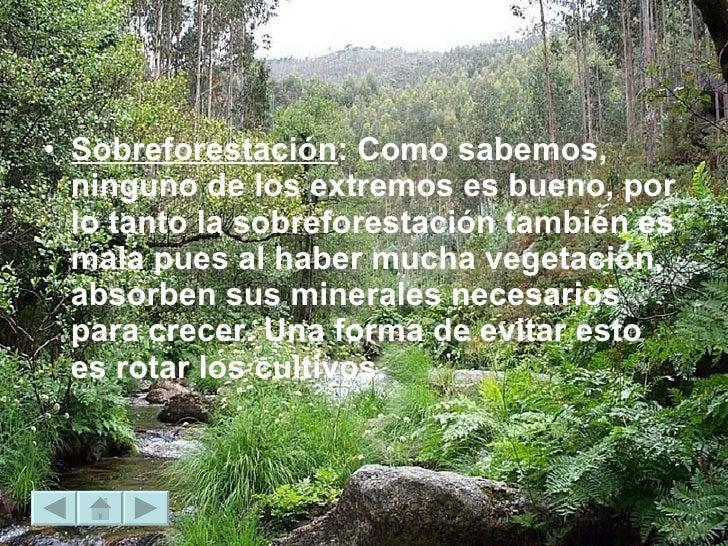 <ul><li>Sobreforestación : Como sabemos, ninguno de los extremos es bueno, por lo tanto la sobreforestación también es mal...