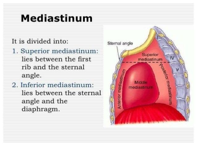 Mediastinal Anatomy Classification Of Mediastinal Masses Ans Its Localization