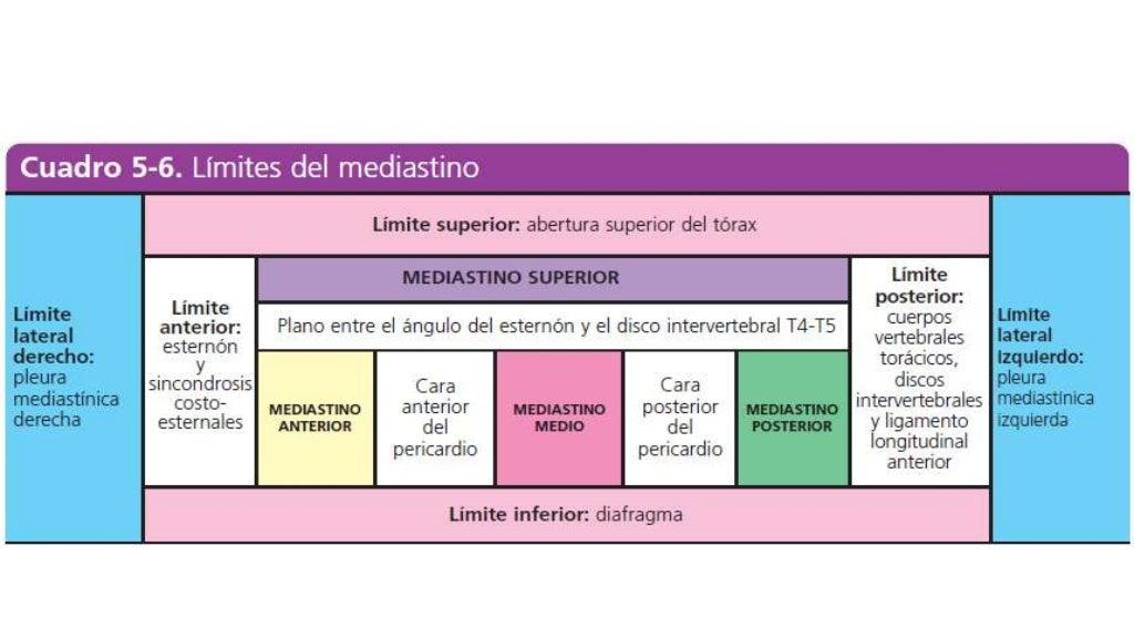 Anatomía - Mediastino