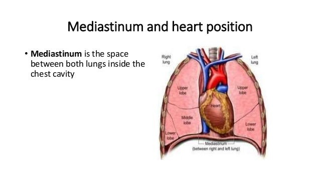 Mediastinum and heart position