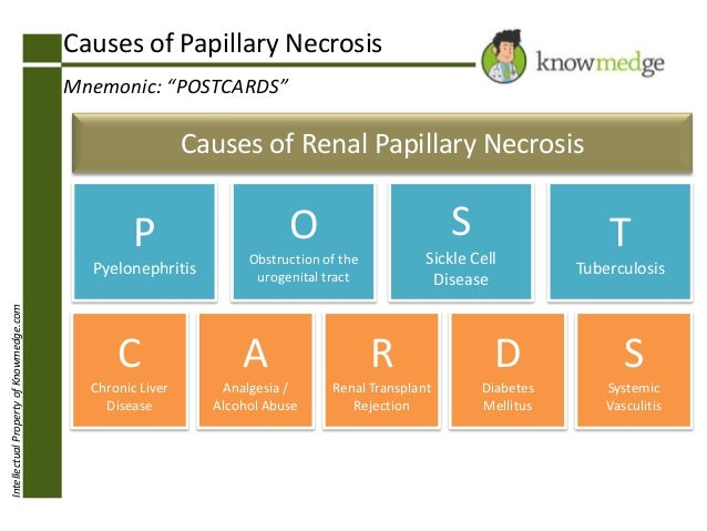 "IntellectualPropertyofKnowmedge.com Causes of Papillary Necrosis Mnemonic: ""POSTCARDS"" C Chronic Liver Disease A Analgesia..."