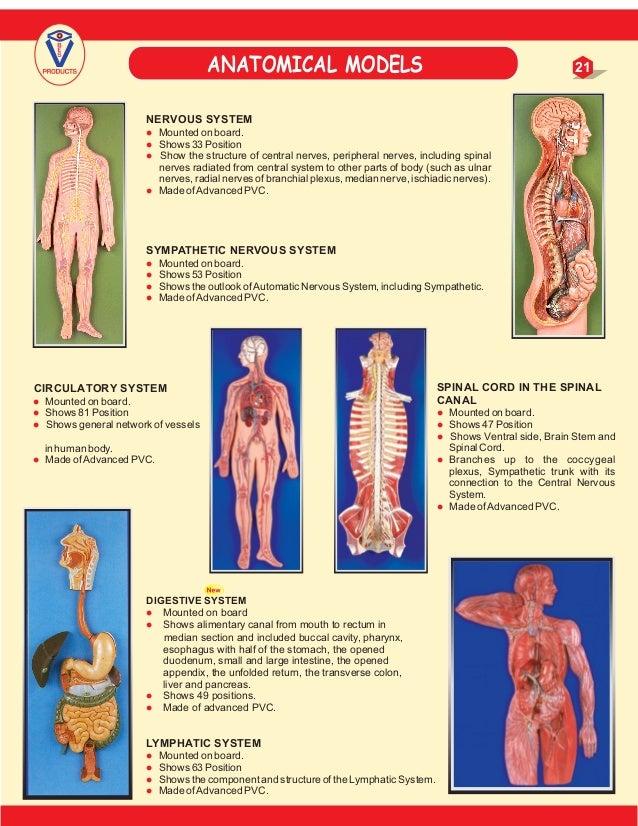 Medical models catalog Mauli 2017-contact-7020026669