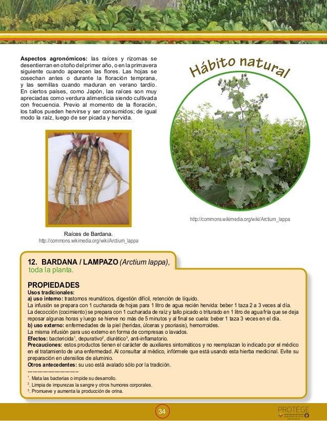 Medicamentos herbarios tradicionales minsal 2009