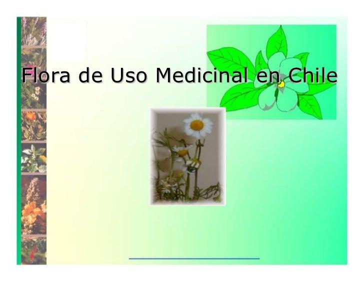 Flora de Uso Medicinal en Chile
