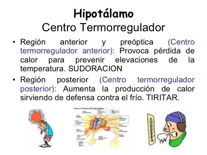 Medicina Fisiologia Termoregulacion Y Piel
