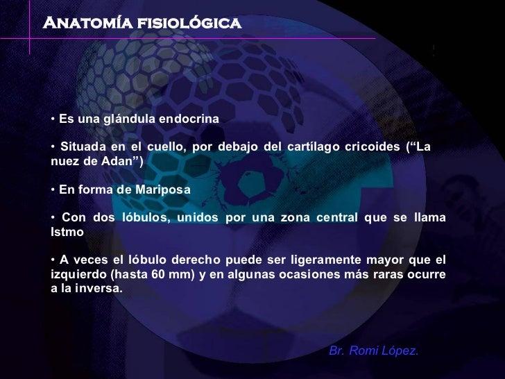 Medicina Fisiologia Tiroides