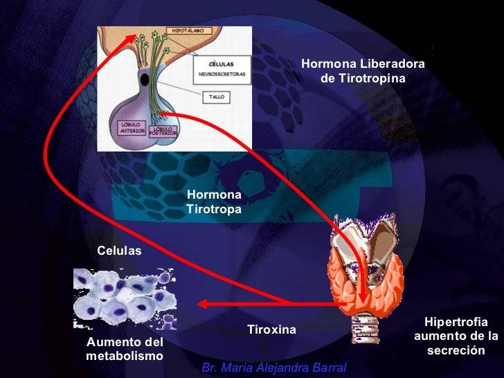 Ideas para ayudarle con calcular metabolismo basal harris benedict