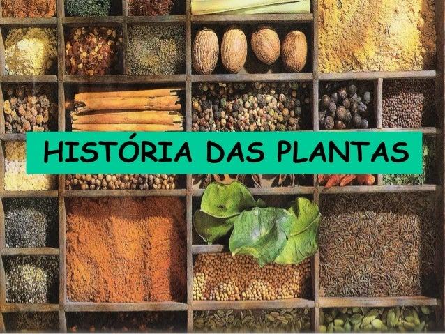 HISTÓRIA DAS PLANTAS