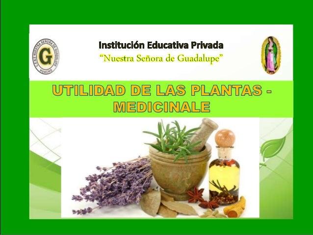 I I- Unidad: Tema: UTILIDAD DE LAS PLANTAS - MEDICINALES MANZANILLA DOLOR DE ESTOMAGO