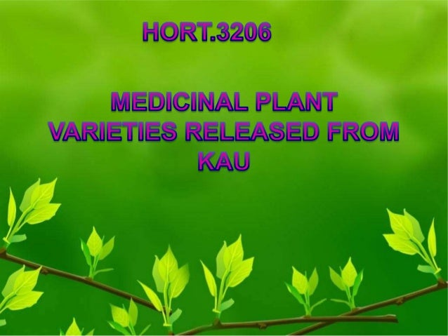 Profitable Aloe Vera Farming Business Plan