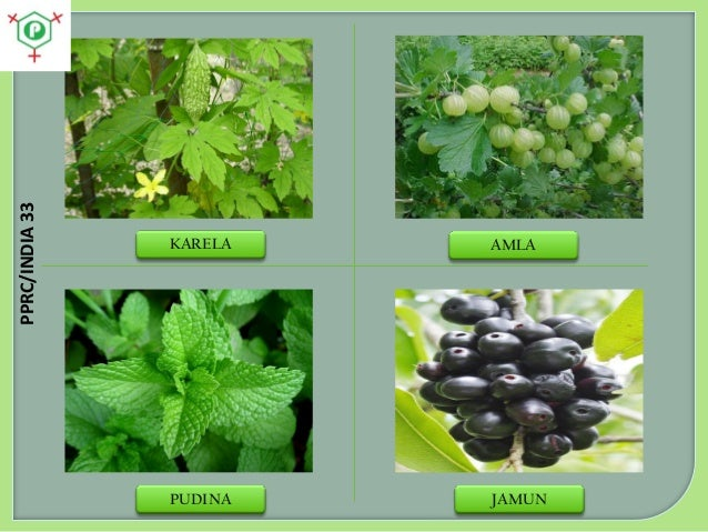 Medicinal plants in India