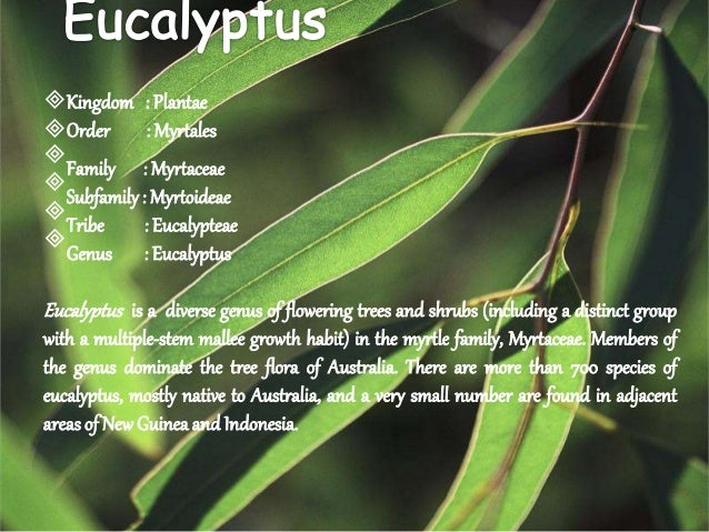 medicinal plants and their uses with pictures pdf