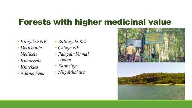 Forests with higher medicinal value • Ritigala SNR • Dolukanda • Nellikele • Rumassala • Knuckles • Adams Peak • Rathugala...